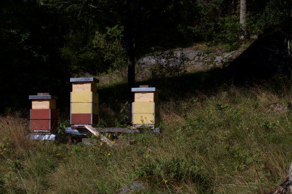 Beuten mit Buckfast - Bienen - Irgendwo in Süd-Schweden