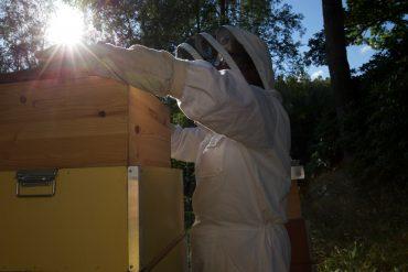 Kontrolle Honigraum Buckfast - Beute Schweden