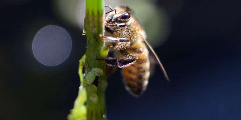 Kleine Bienen ganz groß