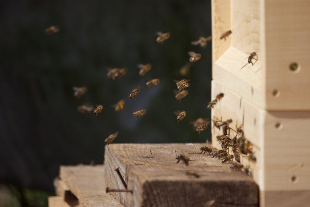 Bienenstock Eingang, An und Abflug an einem sonnigen Frühlingstag